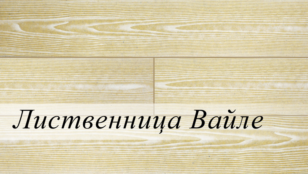 лиственница вайле